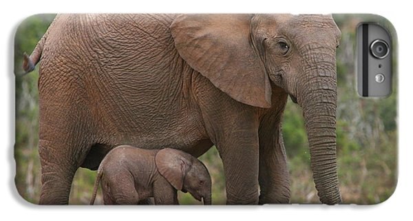 Mother And Calf IPhone 6 Plus Case by Bruce J Robinson