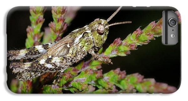 Mottled Grasshopper Juvenile IPhone 6 Plus Case by Nigel Downer
