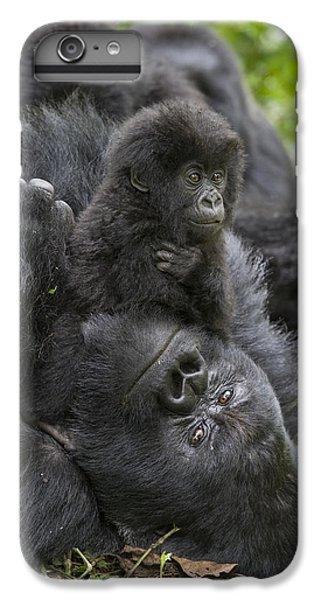 Mountain Gorilla Baby Playing IPhone 6 Plus Case by Suzi  Eszterhas