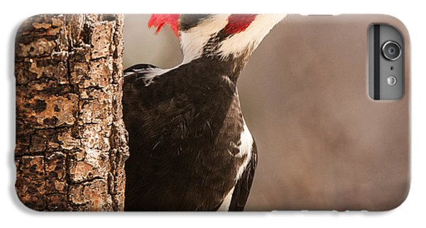 Mr. Pileated IPhone 6 Plus Case by Lara Ellis