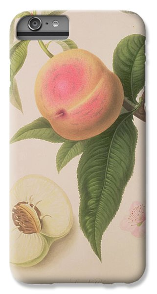 Noblesse Peach IPhone 6 Plus Case by William Hooker