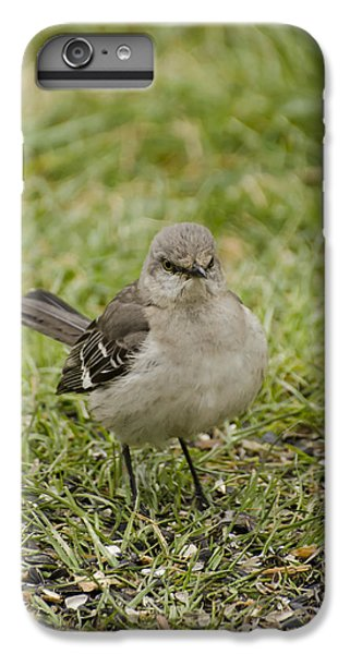 Northern Mockingbird IPhone 6 Plus Case by Heather Applegate