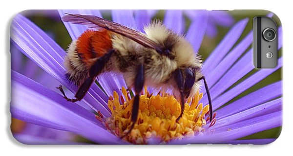 Orange-banded Bee IPhone 6 Plus Case by Rona Black
