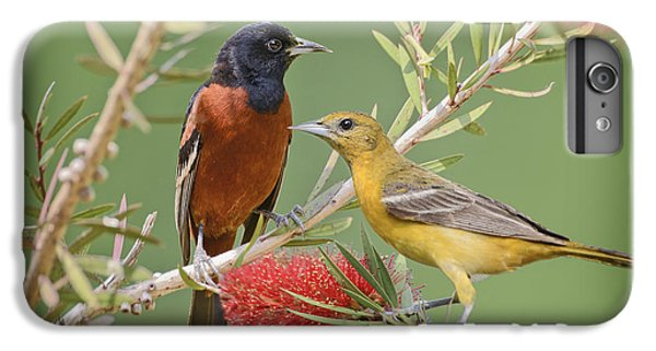 Orchard Oriole Pair IPhone 6 Plus Case by Bonnie Barry