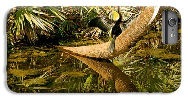 Oriental Darter Anhinga Melanogaster IPhone 6 Plus Case by Panoramic Images