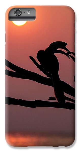 Oriental Pied Hornbills IPhone 6 Plus Case by Paul Williams