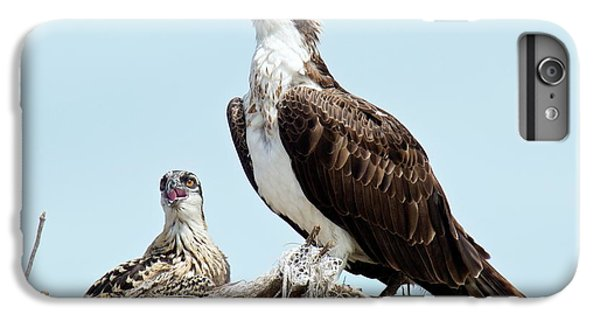 Osprey And Chick IPhone 6 Plus Case by Bob Gibbons