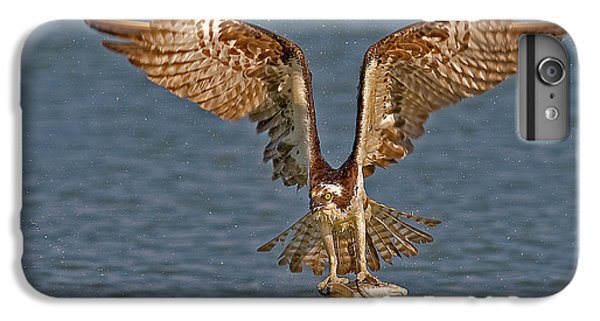 Osprey Morning Catch IPhone 6 Plus Case by Susan Candelario