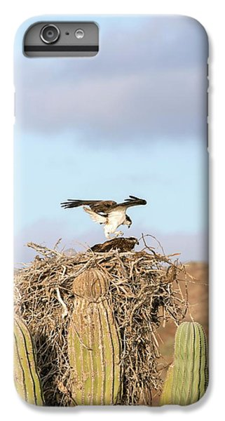 Ospreys Nesting In A Cactus IPhone 6 Plus Case by Christopher Swann