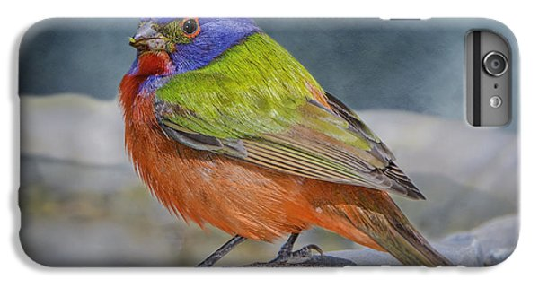 Painted Bunting In April IPhone 6 Plus Case by Bonnie Barry