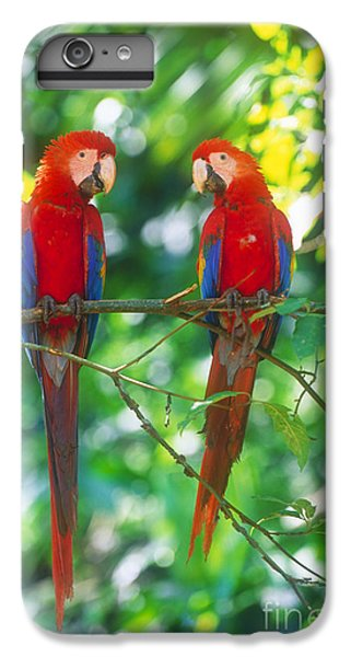 Pair Of Scarlet Macaws IPhone 6 Plus Case by Art Wolfe
