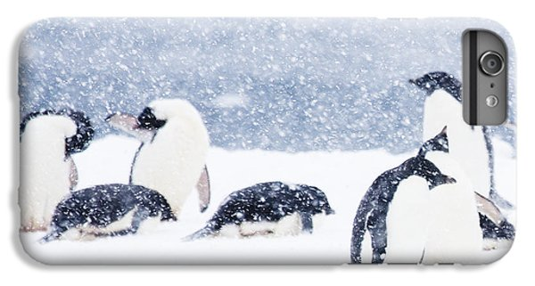 Penguins In The Snow IPhone 6 Plus Case by Carol Walker