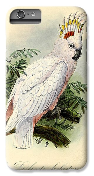Pied Cockatoo IPhone 6 Plus Case by J G Keulemans