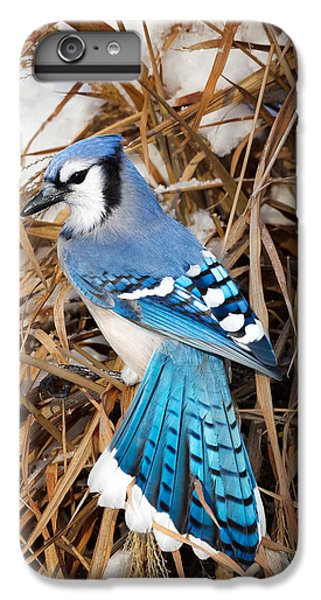 Portrait Of A Blue Jay IPhone 6 Plus Case by Bill Wakeley