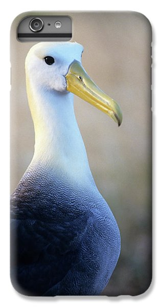 Portrait Of A Waved Albatross IPhone 6 Plus Case by Thomas Wiewandt