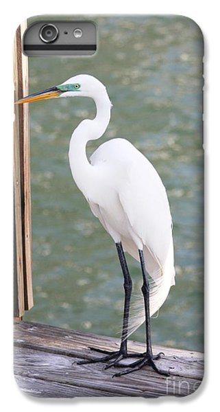 Pretty Great Egret IPhone 6 Plus Case by Carol Groenen