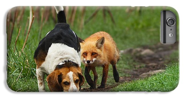 Probably The World's Worst Hunting Dog IPhone 6 Plus Case by Mircea Costina Photography