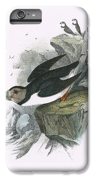 Puffin IPhone 6 Plus Case by English School