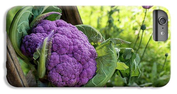 Purple Cauliflower IPhone 6 Plus Case by Aberration Films Ltd