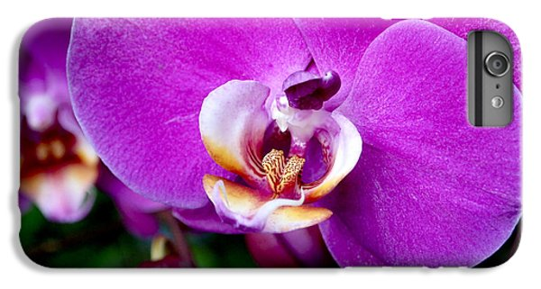 Purple Orchid IPhone 6 Plus Case by Rona Black
