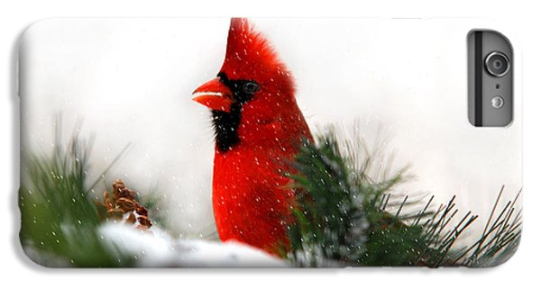 Red Cardinal IPhone 6 Plus Case by Christina Rollo