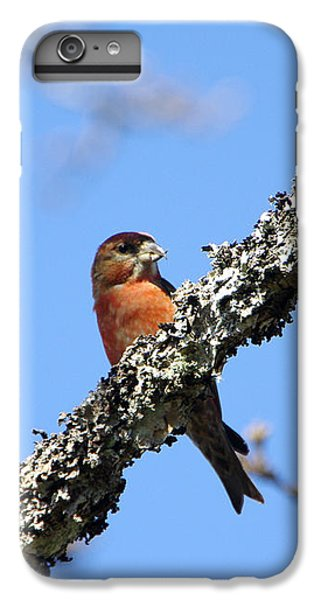 Red Crossbill Finch IPhone 6 Plus Case by Marilyn Wilson