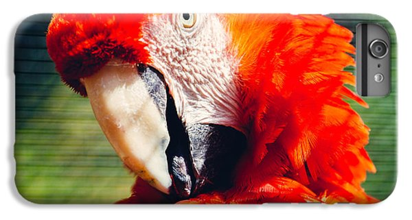 Red Macaw Closeup IPhone 6 Plus Case by Pati Photography