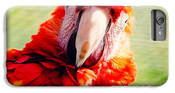 Red Macaw IPhone 6 Plus Case by Pati Photography