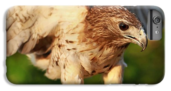 Red Tailed Hawk Hunting IPhone 6 Plus Case by Dan Sproul