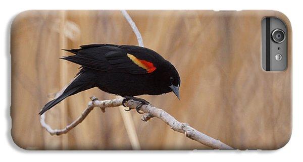 Red Winged Blackbird 1 IPhone 6 Plus Case by Ernie Echols