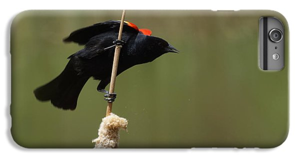 Red Winged Blackbird 3 IPhone 6 Plus Case by Ernie Echols