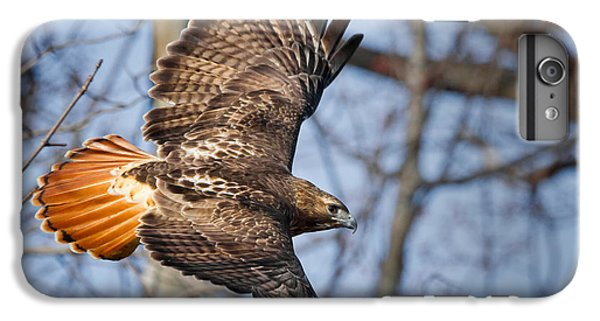 Redtail Hawk IPhone 6 Plus Case by Bill Wakeley