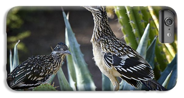Roadrunners At Play  IPhone 6 Plus Case by Saija  Lehtonen