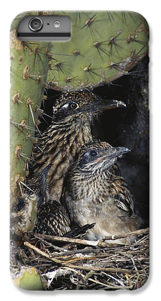 Roadrunners In Nest IPhone 6 Plus Case by Anthony Mercieca