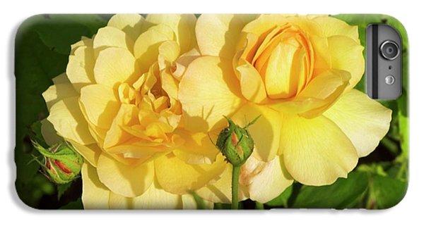 Rosa 'pegasus' IPhone 6 Plus Case by Adrian Thomas