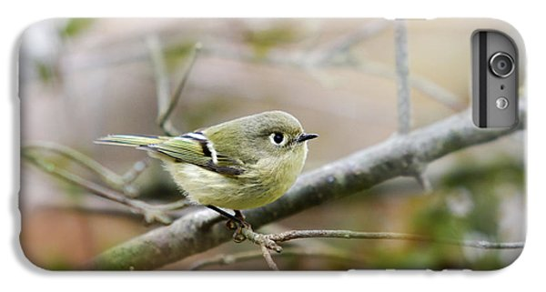 Ruby-crowned Kinglet IPhone 6 Plus Case by Christina Rollo