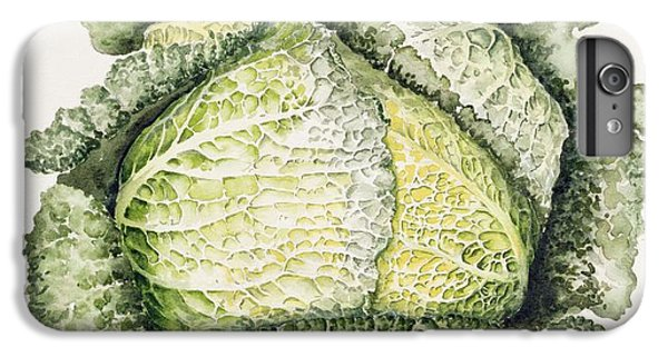 Savoy Cabbage  IPhone 6 Plus Case by Alison Cooper