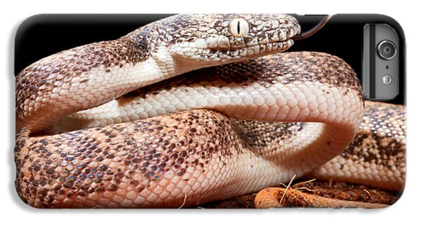 Savu Python In Defensive Posture IPhone 6 Plus Case by David Kenny