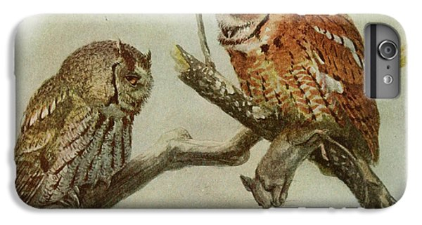 Screech Owls IPhone 6 Plus Case by Louis Agassiz Fuertes