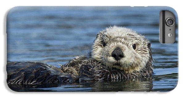 Sea Otter Alaska IPhone 6 Plus Case by Michael Quinton
