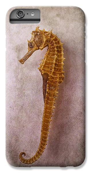 Seahorse Still Life IPhone 6 Plus Case by Garry Gay