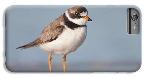 Semipalmated Plover IPhone 6 Plus Case by Clarence Holmes