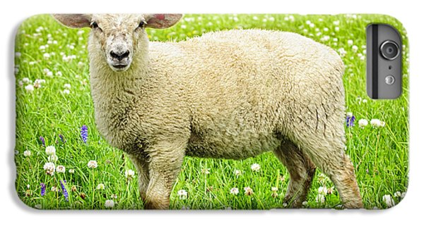 Sheep In Summer Meadow IPhone 6 Plus Case by Elena Elisseeva