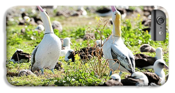 Short-tailed Albatross (phoebastria IPhone 6 Plus Case by Daisy Gilardini