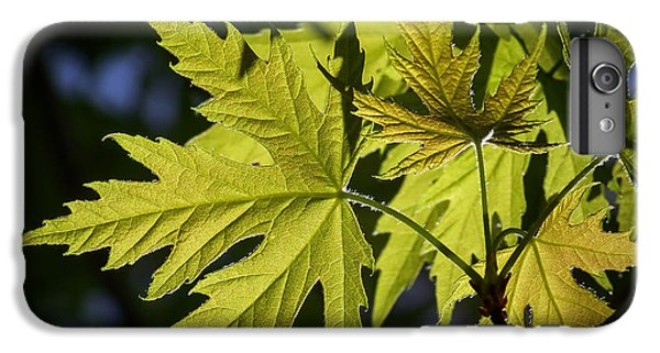 Silver Maple IPhone 6 Plus Case by Ernie Echols