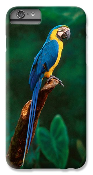 Singapore Macaw At Jurong Bird Park  IPhone 6 Plus Case by Anonymous