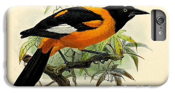 Small Oriole IPhone 6 Plus Case by J G Keulemans