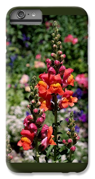 Snapdragons IPhone 6 Plus Case by Rona Black