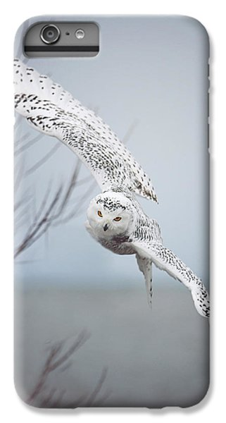 Snowy Owl In Flight IPhone 6 Plus Case by Carrie Ann Grippo-Pike