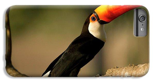 South America, Brazil, Pantanal, Mato IPhone 6 Plus Case by Joe and Mary Ann Mcdonald